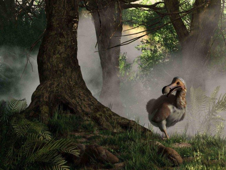 O dodô: a história de um pássaro extinto