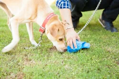 Dono recolhendo fezes do seu cão
