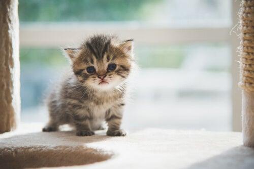 Quando e como mover uma ninhada de gatos?