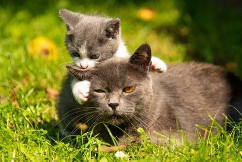 Quando mover uma ninhada de gatos?