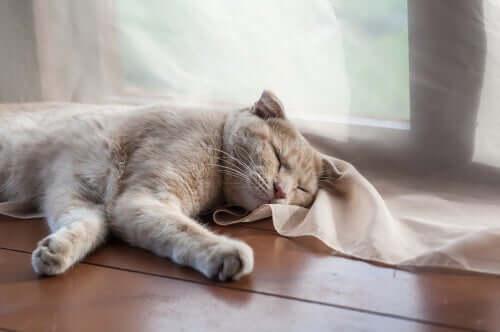 Gato dormindo no chão