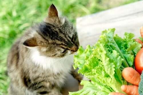 Os gatos podem ser veganos?