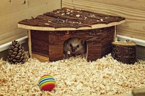 A higiene dos hamsters