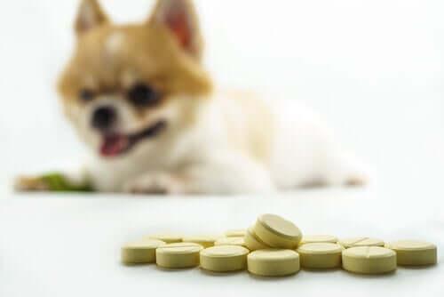 Os melhores suplementos para as articulações dos cães