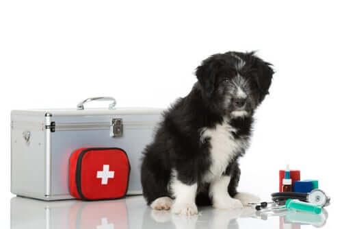 Kit de primeiros socorros para pets: faça você mesmo