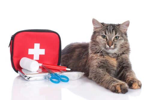 Gato e kit de primeiros socorros