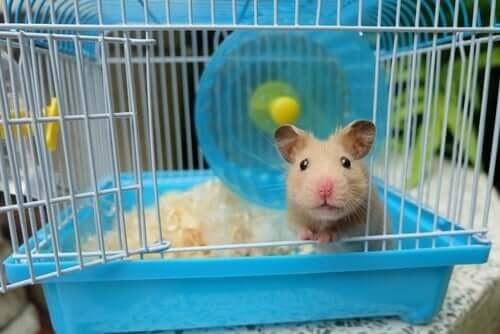 Área de lazer para roedores