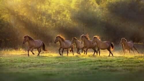Cavalos correndo sob o sol