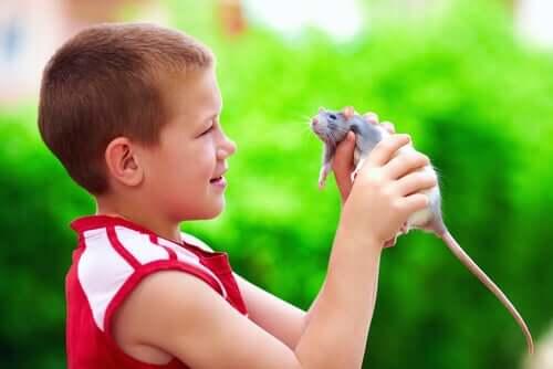 Menino segurando um rato de estimação