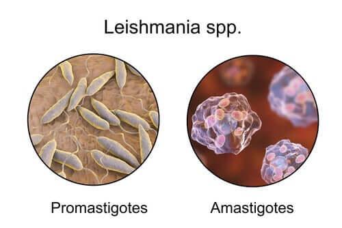 Causas da leishmaniose