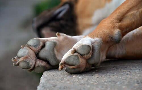 As patas dos cães e seus diferentes tipos de lesões