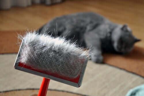 Como evitar bolas de pelo em gatos