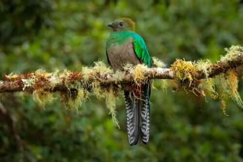 Distribuição e estado de preservação do quetzal