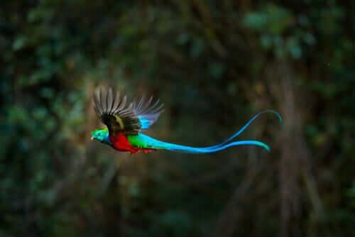 Morfologia e comportamento do quetzal