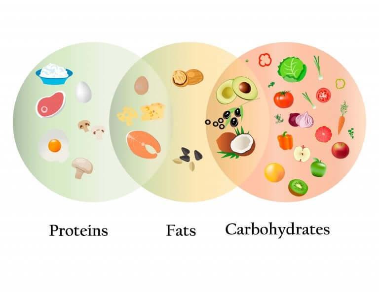 Proteínas, gorduras e carboidratos