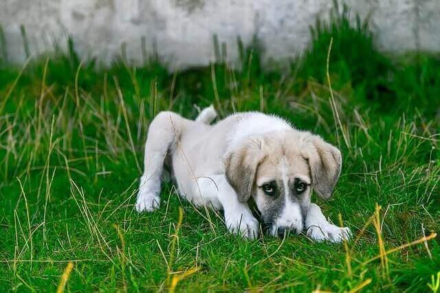 Como restaurar o equilíbrio intestinal de cães e gatos
