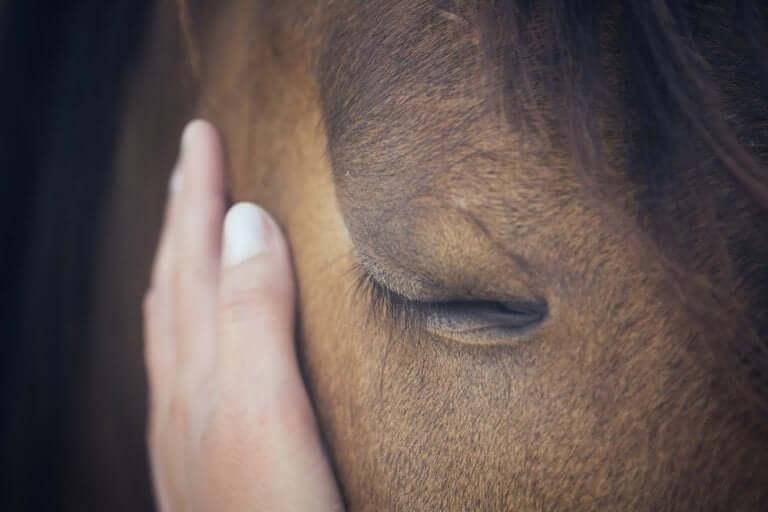 Como os cavalos conseguem interpretar as emoções humanas?