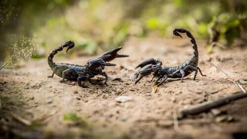 Escorpiões: oito coisas que você precisa saber