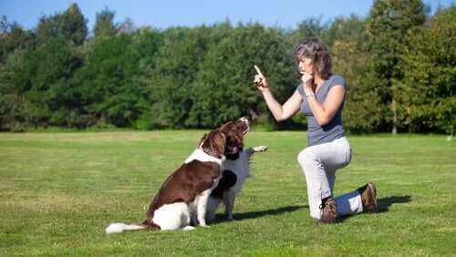 Treinamento de cães de mediação
