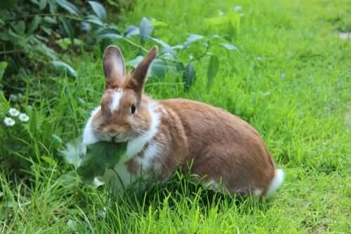 Alimentação dos coelhos