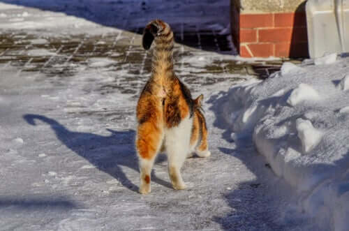 O que causa o mau cheiro no bumbum dos gatos?