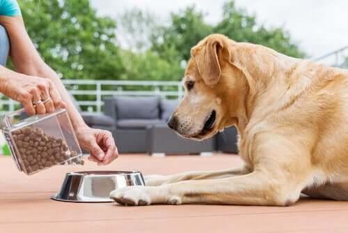 Cachorro comendo ração