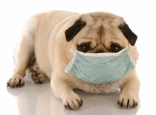 A influência da poluição na saúde canina