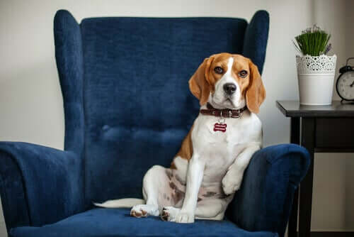 Seu animal de estimação precisa de um psiquiatra?