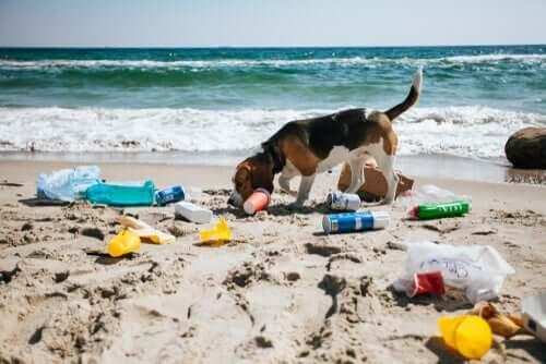 Cachorro brincando em praia poluída