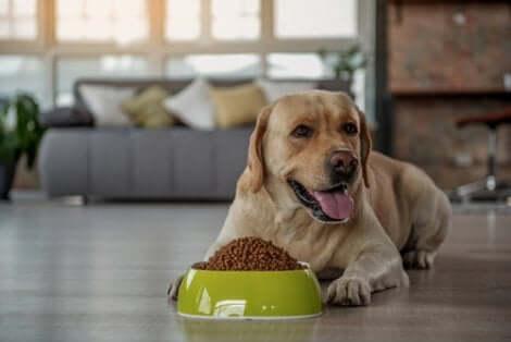 Ração seca para cães