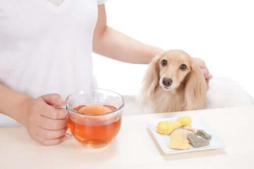 As ervas medicinais e a saúde dos animais de estimação
