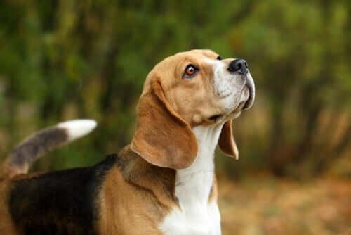 Benefícios dos antibióticos naturais para os cães
