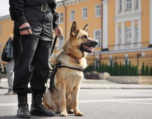 Cães guardiões e protetores