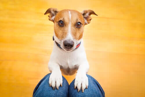 Como os cães conseguem reconhecer os membros da família?