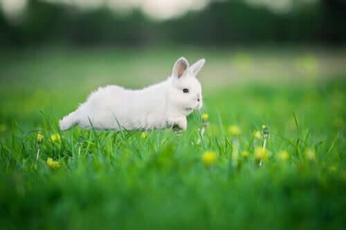 Coelho correndo na grama