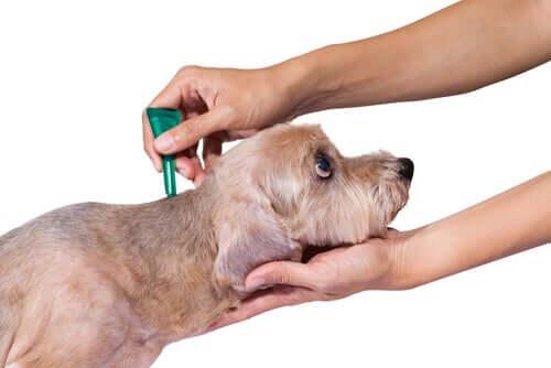 Dicas para desparasitar seu cão