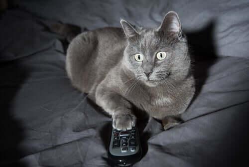 4 razões para o comportamento noturno dos gatos