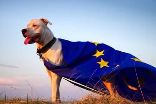 Bem-estar animal na UE: a Convenção Europeia para a proteção dos animais de companhia