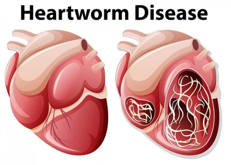 Doença do verme do coração