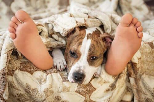 É seguro dormir com um animal de estimação?