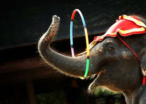 Elefante em circo