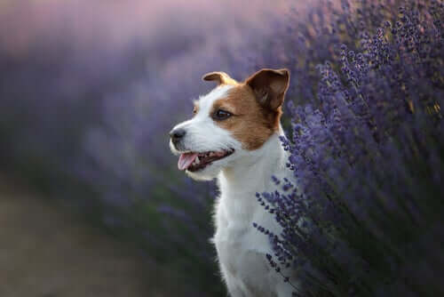 3 ervas benéficas para os animais de estimação