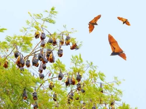 Morcegos pendurados em árvore