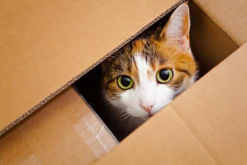 Gato dentro de caixa