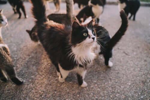 Quais doenças os gatos podem nos transmitir?
