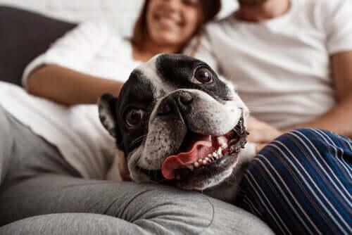 Riscos do excesso de humanização dos cães