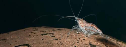Krill no fundo do oceano