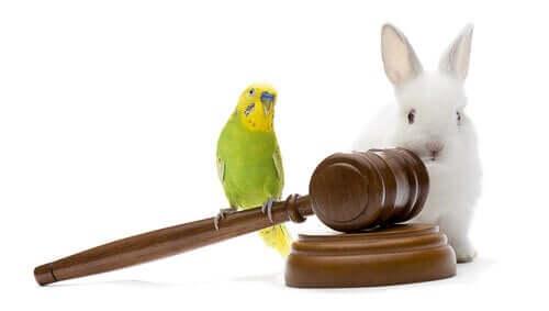 As leis de proteção animal no mundo