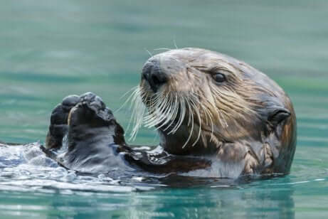 Habitat da lontra marinha