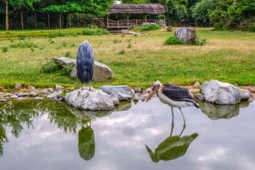 Habitat do marabu